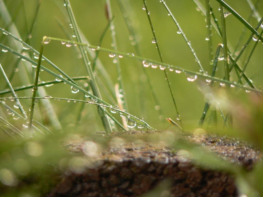 Wassertropfen am Gras