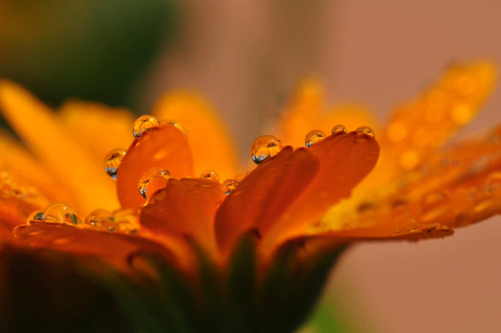 Wassertropfen auf einer Blume