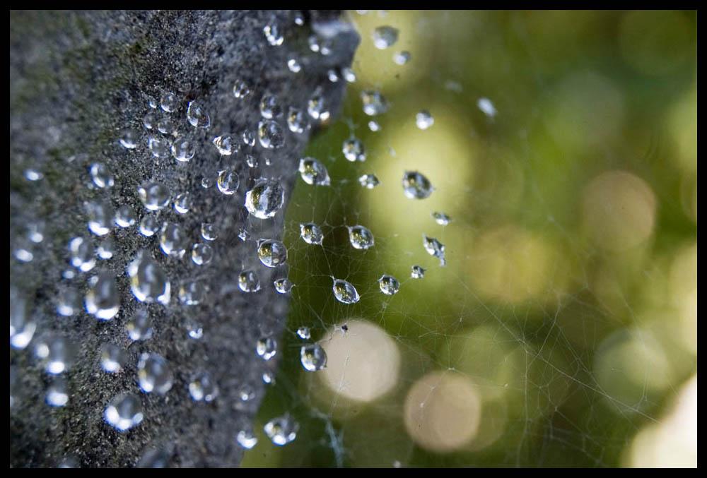 Wassertropfen in Spinnennetz