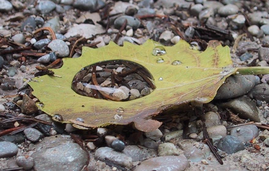Wassertropfen mit Steinen auf Blatt