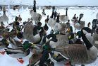 Wasservögel an der Ruhr