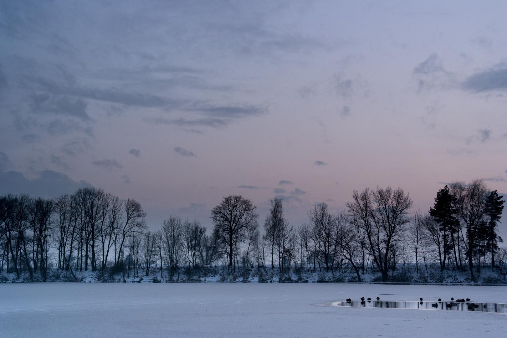 Wasservögel auf dem gefrorenen Alten Rhein