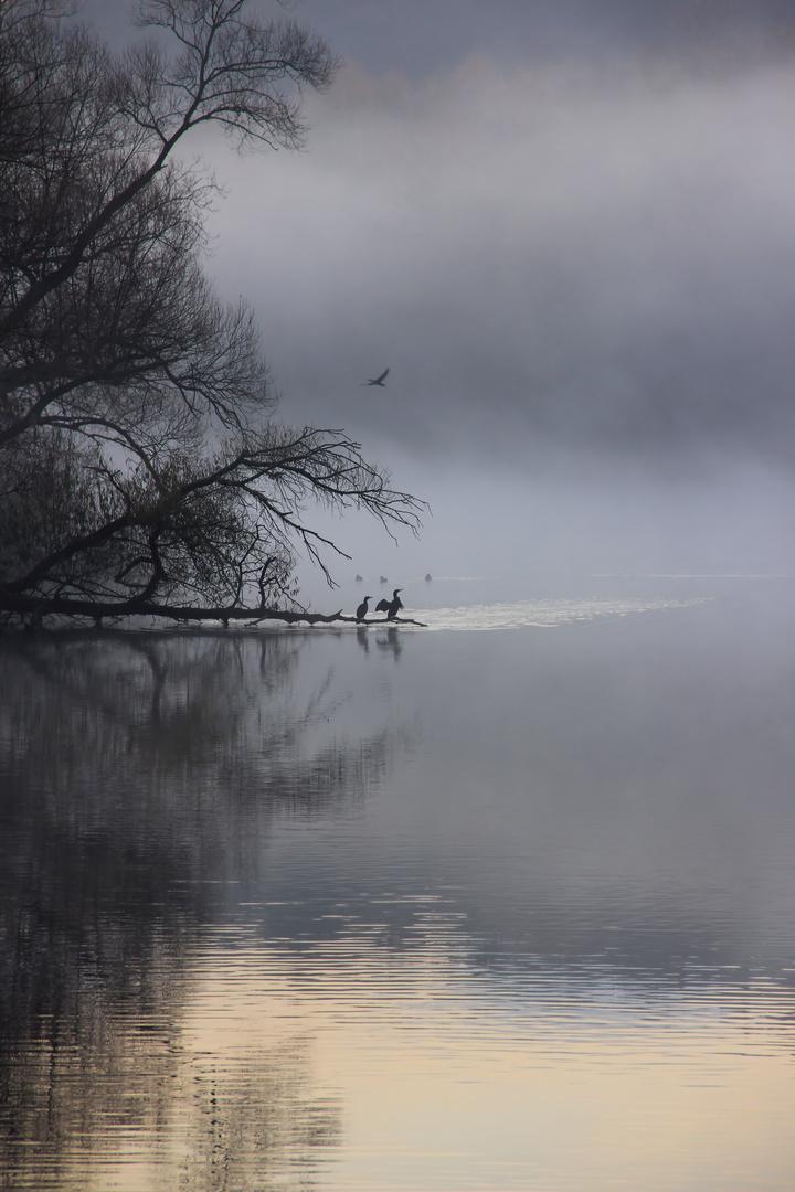 Wasservögel im Nebel