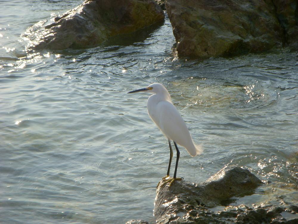 Wasservogel mit schoener Maehne