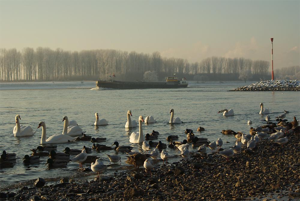 Wasservogelparadies