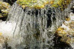 Wasserzöpfe