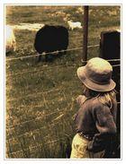 Watching the sheep