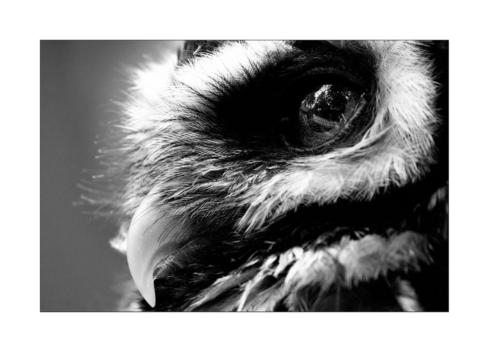*watching you*