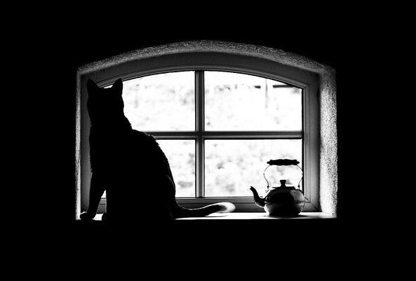 ..... watching you .....