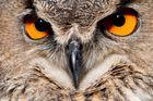 watching you !
