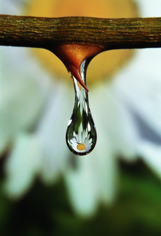 Water drop-1