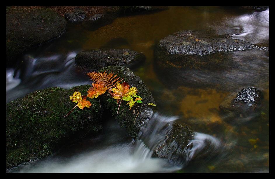 « Water - Fall »