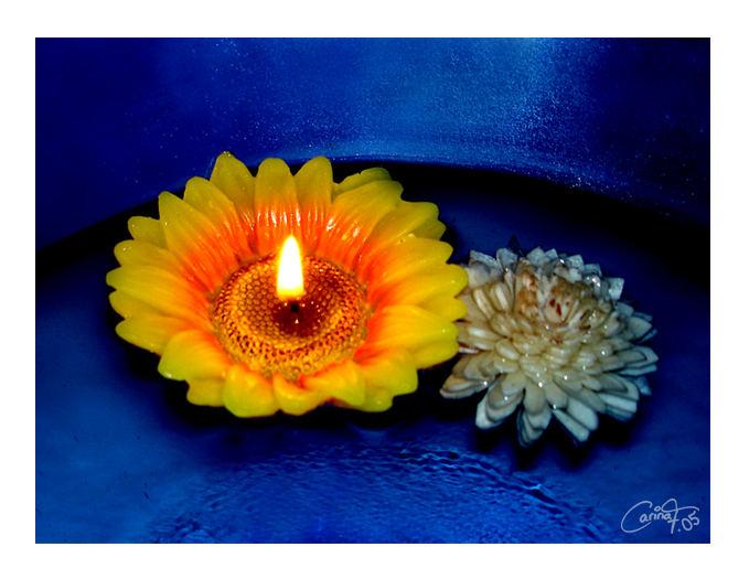 Water - Flower - Fire