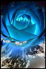 WATER ROSE