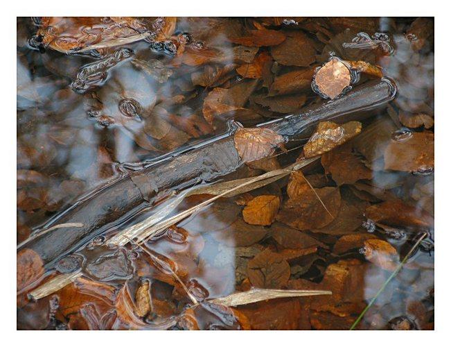 Water still life # 2