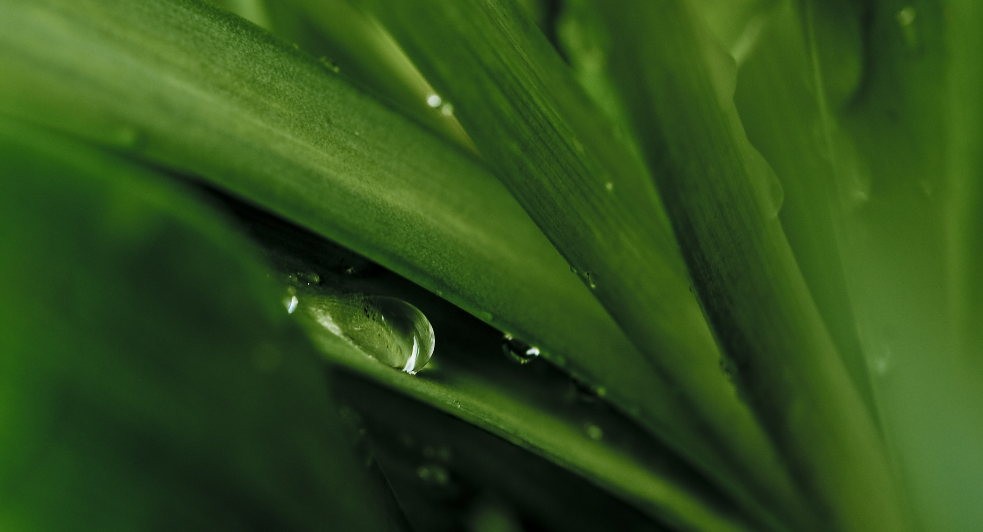 water_drop_plant