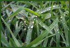 waterdrops°