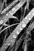 waterdrops.