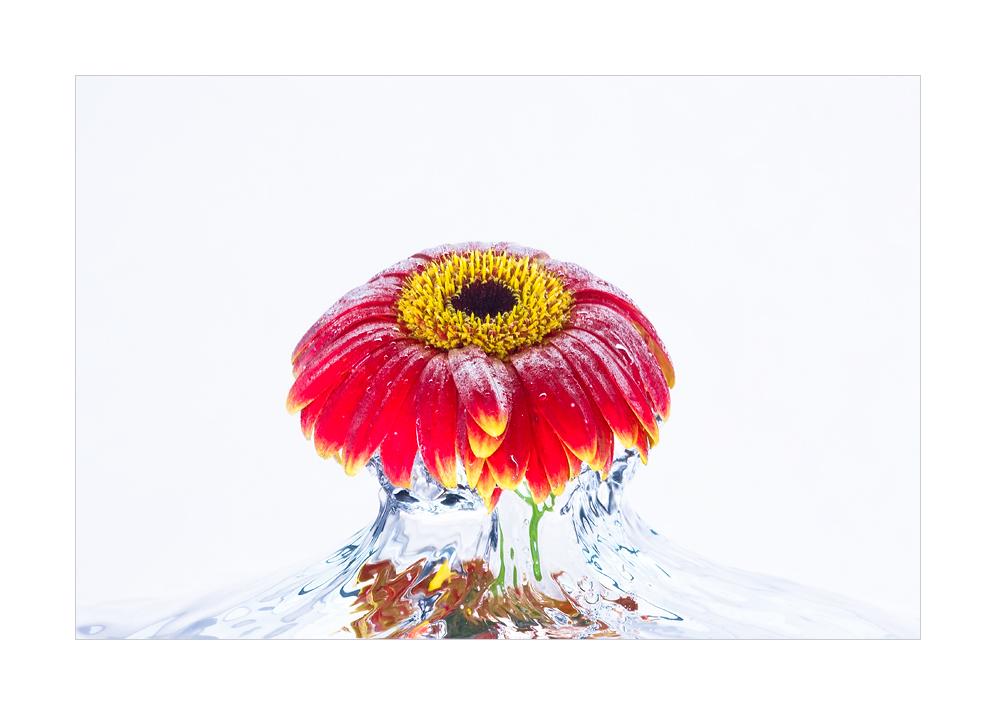 Waterflowers [Part II]
