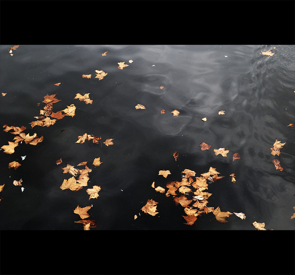 water.leafs.