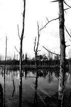 .....waterworld 001......