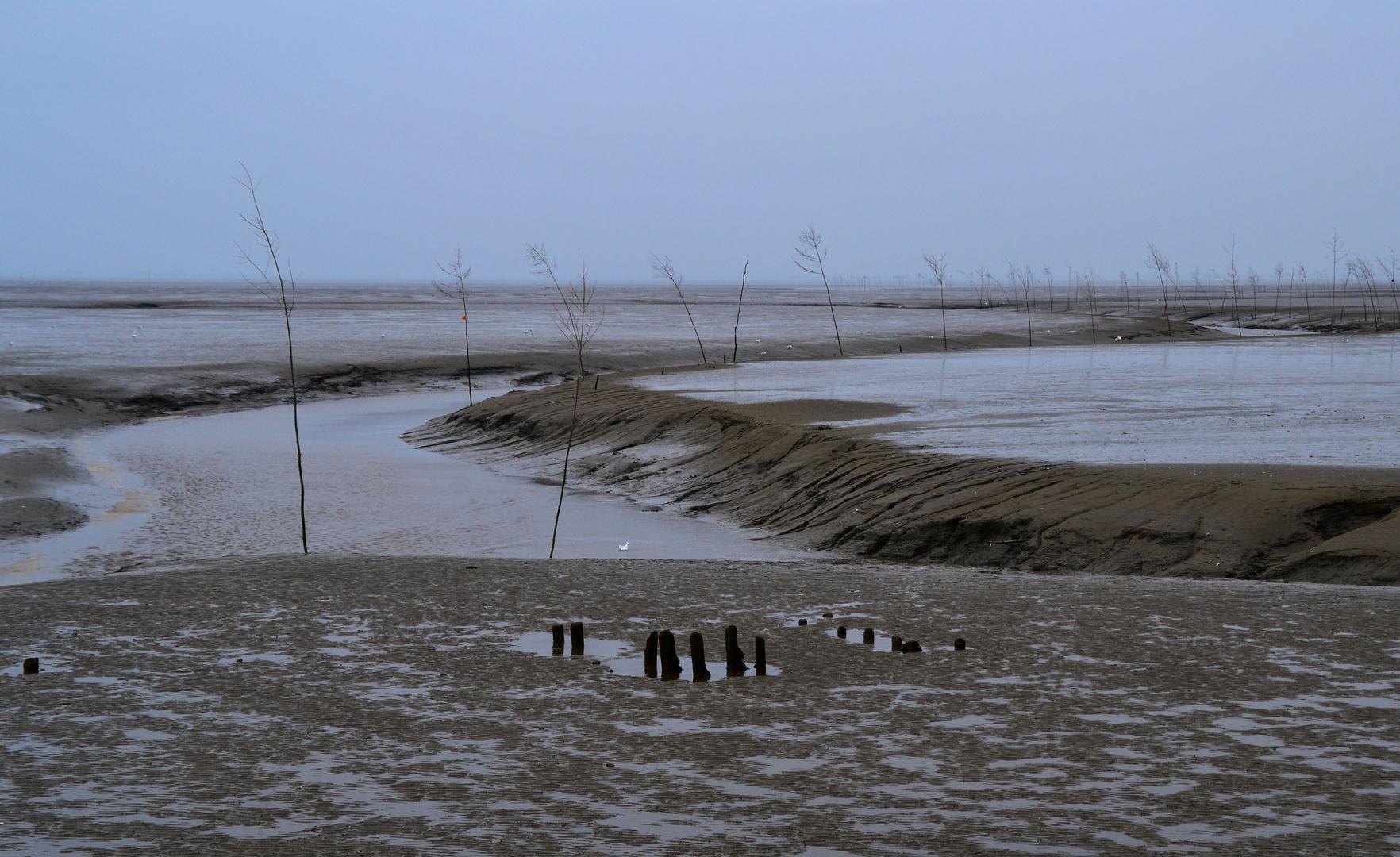 Wattenmeer - 3