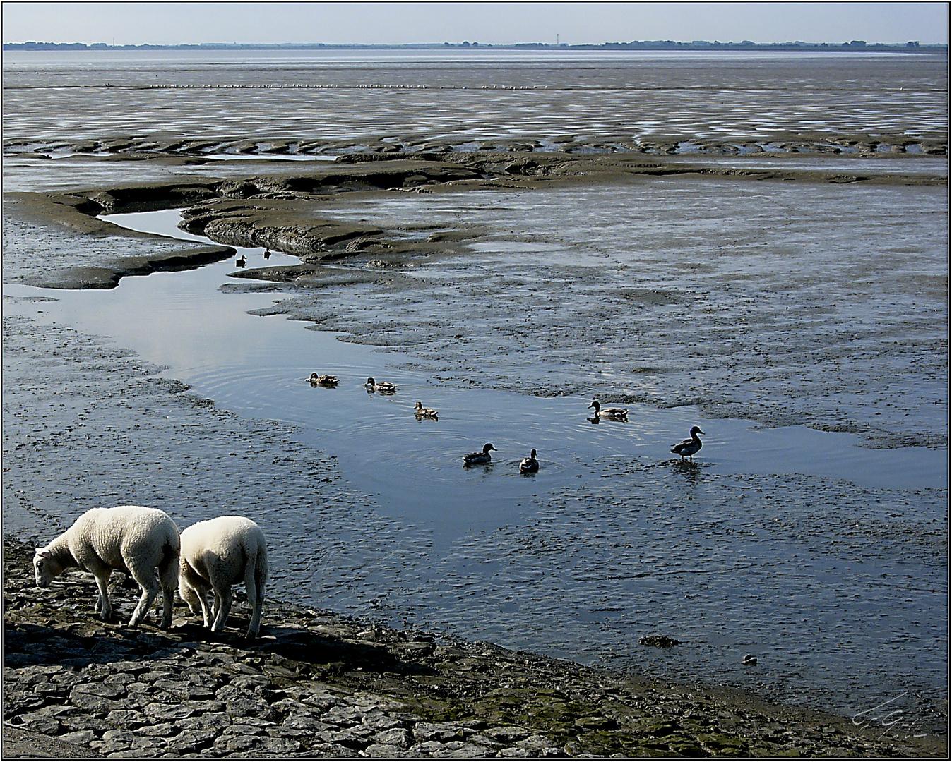 Wattenmeer am Jadebusen