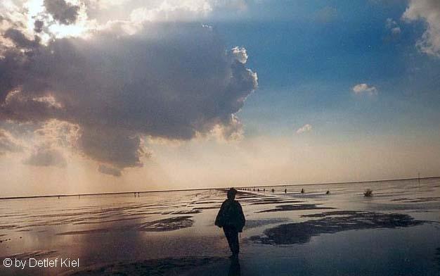 Wattwandern am Abend in Cuxhaven
