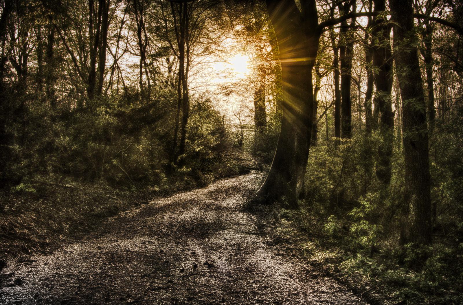 Way of Nature