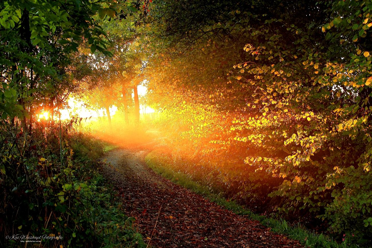 Way to Light!