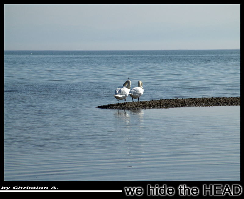 we hide the head