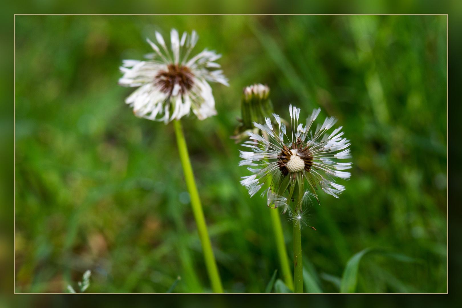 Wedau-Blüten 01