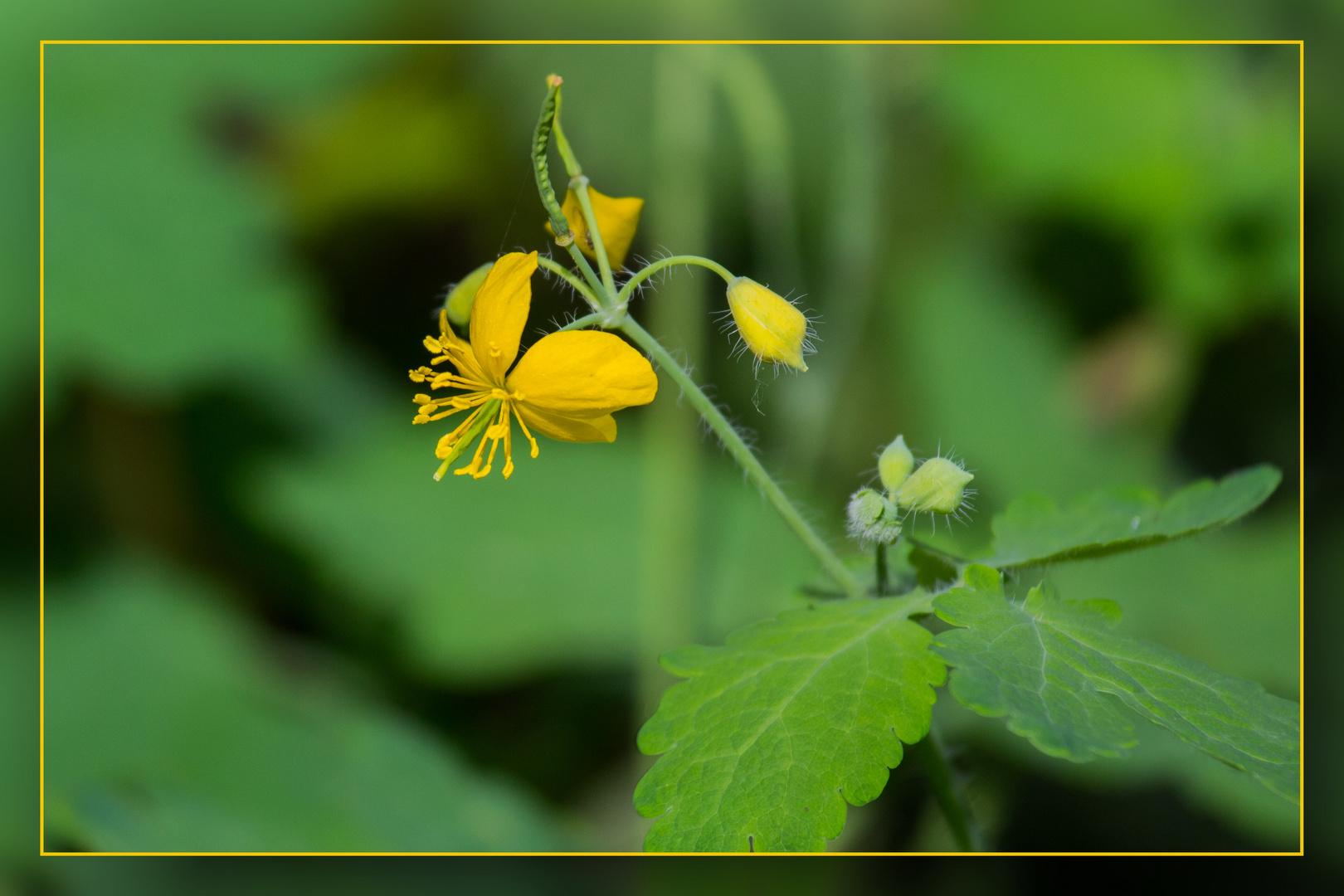 Wedau-Blüten 02