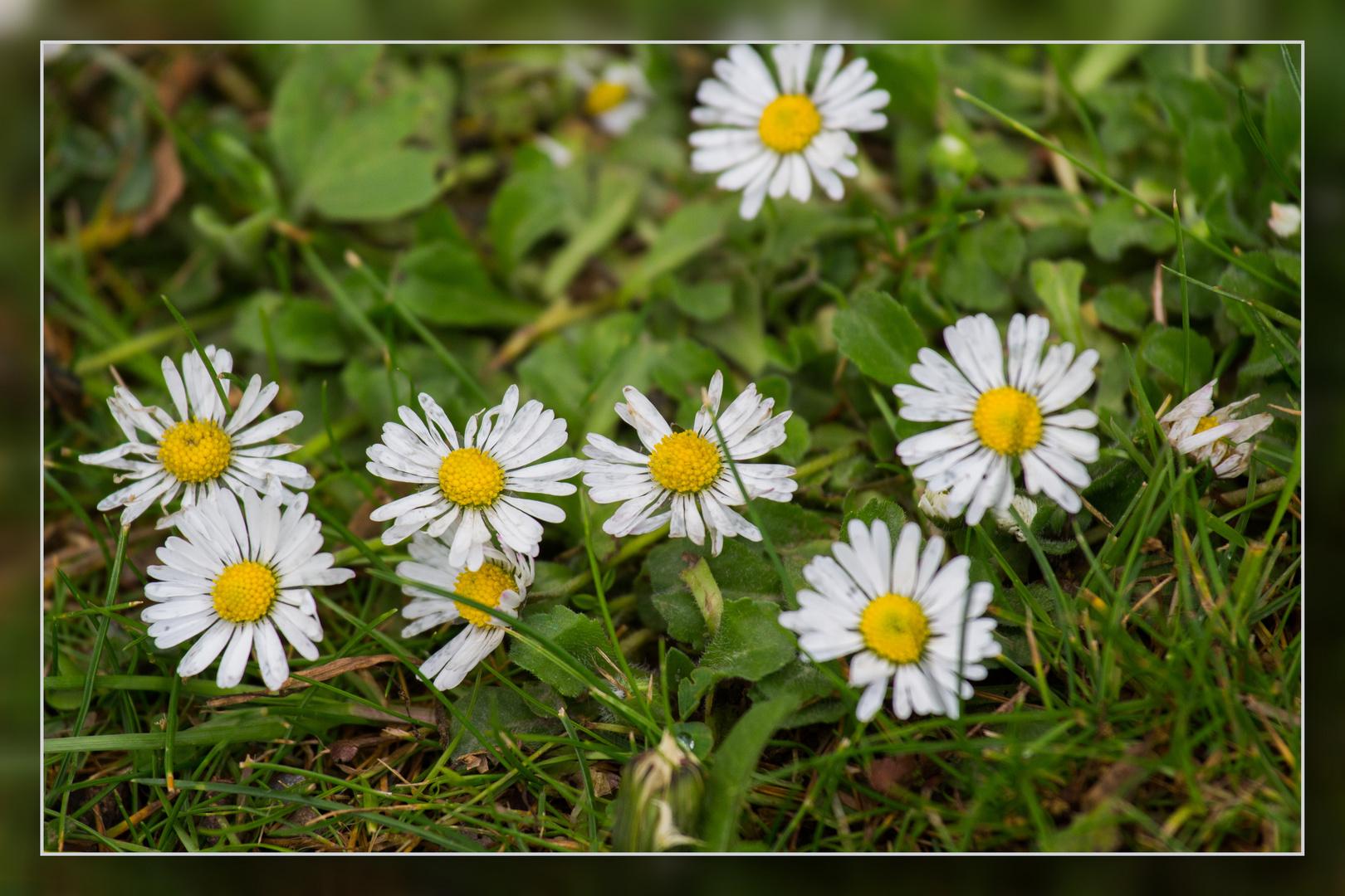 Wedau-Blüten 03