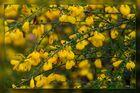 Wedau-Blüten 07