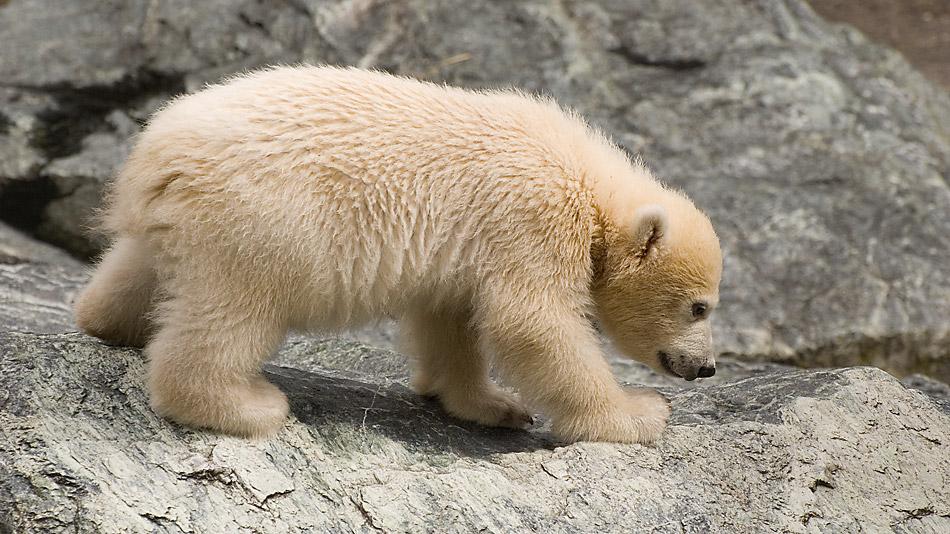 Weder Knut noch Flocke! Wilbär, der aus dem wilden Süden!