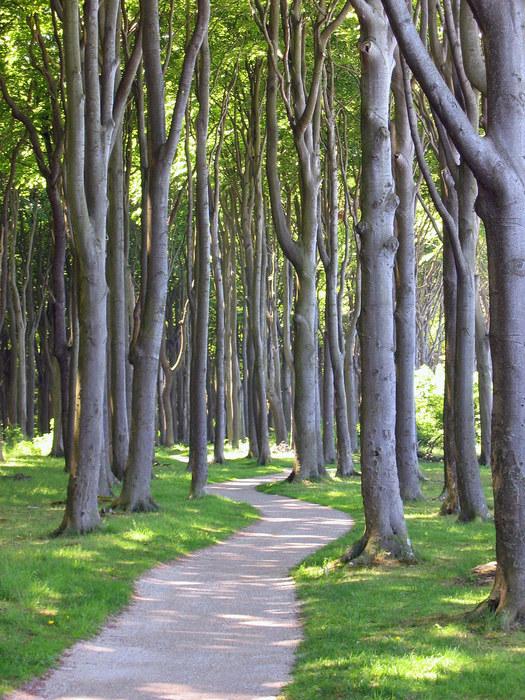 Weg der Bäume