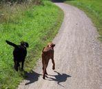 Weg des Lebens - Gemeinsam