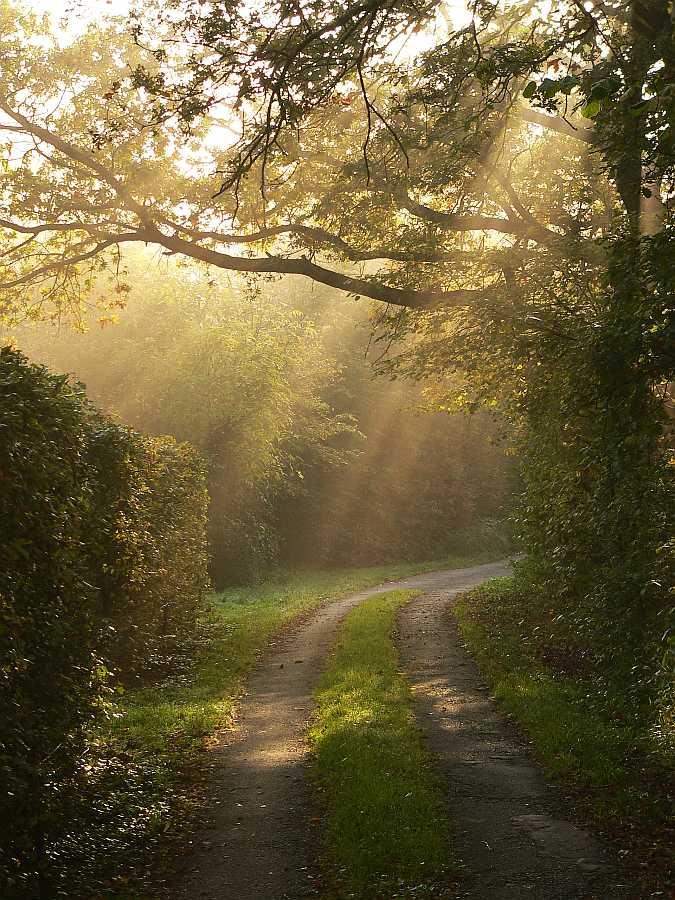 Weg des Lichts