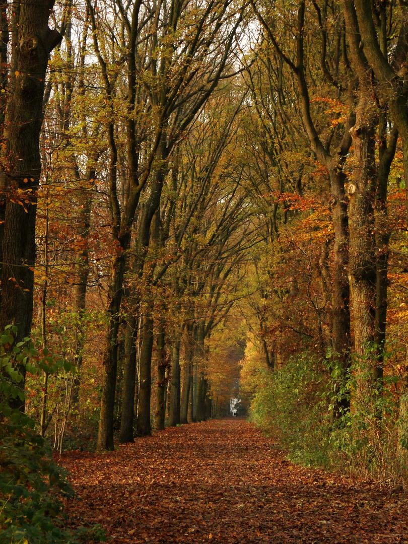 Weg durch den Herbst