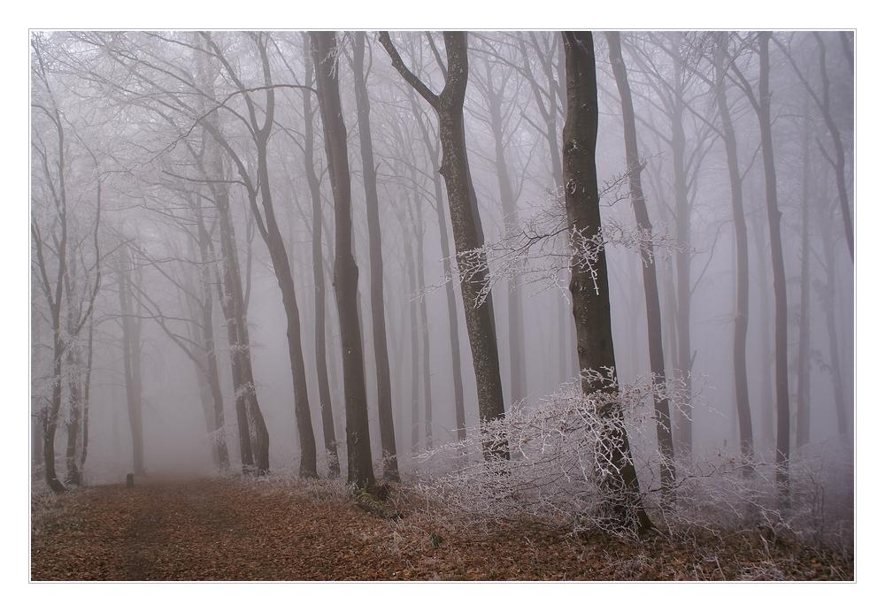 Weg durch den Nebel