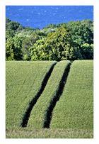 Weg durchs Feld
