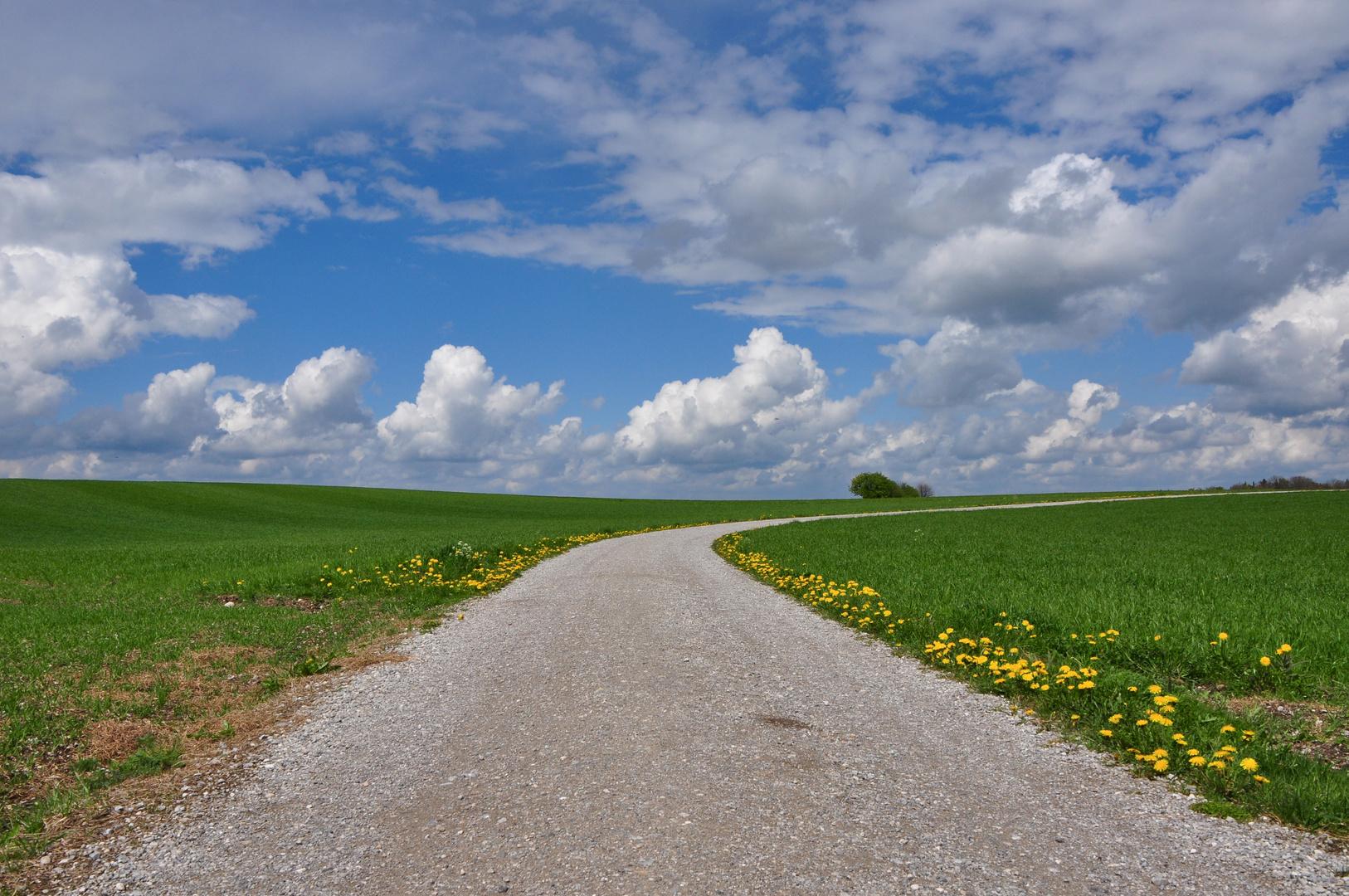 Weg im 5-Seenland