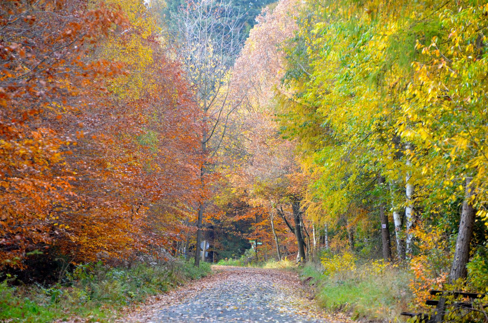 Weg im Herbstwald 2
