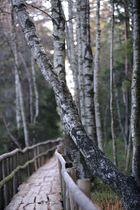 Weg im Hochmoor
