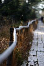 Weg im Hochmoor-I