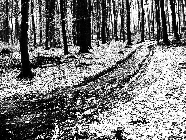 Weg im Langenhainer Wald