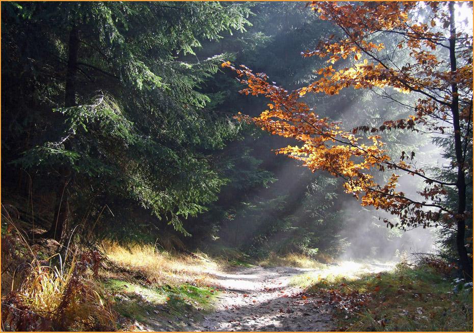 Weg im Morgenlicht
