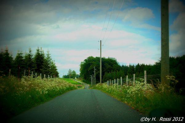 Weg im Sauerland