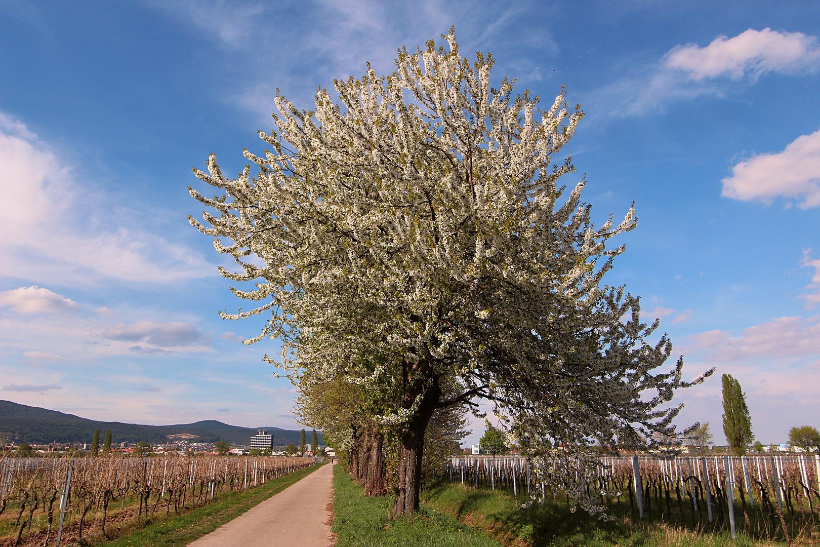 Weg in den Frühling No. 1